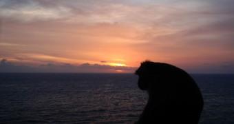 Monyet besar menikmati matahari tenggelam di Uluwatu, Bali
