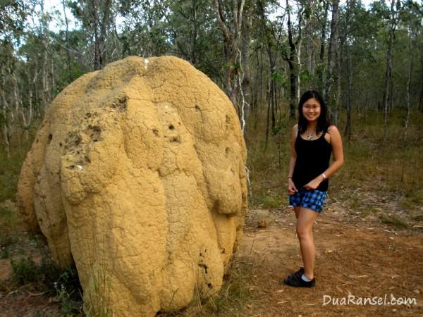 Sarang rayap raksasa di sabana Queensland, Australia