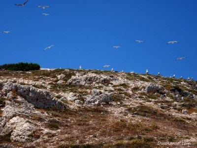 Perancis: Dikejar sekawanan besar burung camar marah di Kepulauan Frioul, lepas pantai Marseille