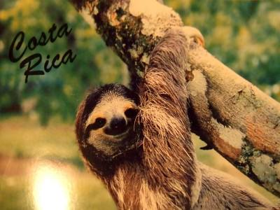 Sloth postcard from Monteverde, Costa Rica