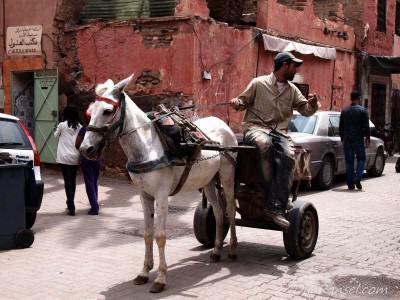 Gerobak kuda - Marrakesh, Maroko