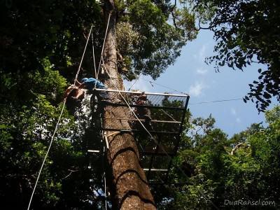 Rappel - Tur zip-line kanopi, hutan hujan-pegunungan Monteverde, Kosta Rika