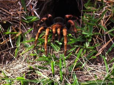 Tarantula - Tur zip-line kanopi, hutan hujan-pegunungan Monteverde, Kosta Rika
