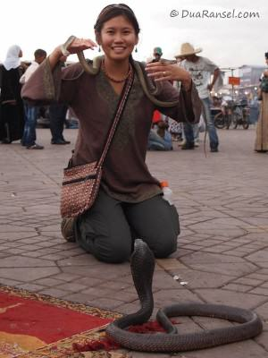 Cobra in Jemaa el-Fna, Marrakesh, Morocco