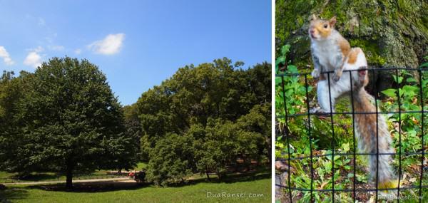 Central park! Squirrelnya nyempluk, mengingatkanku pada chipmunknya Enchanted (udah pada lihat kan?)