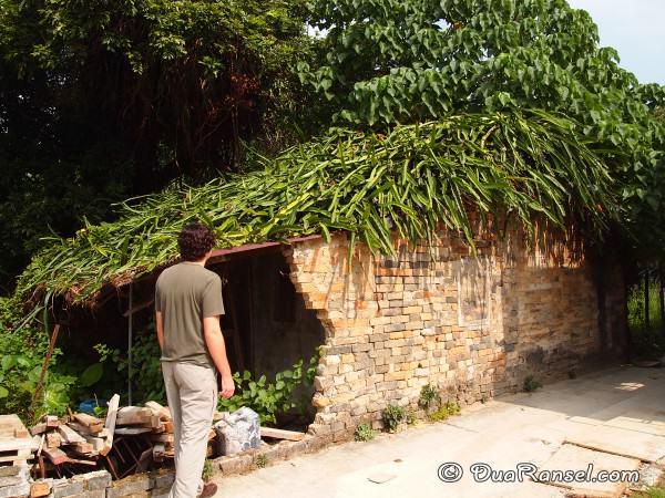 Rumah ambruk beratap kaktus di Kam Tin, Hong Kong