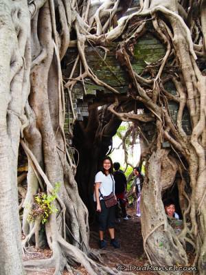 Di dalam Kam Tin Tree House