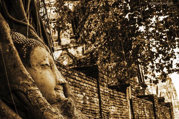 Kepala Buddha terbenam di akar pohon, Wat Mahathat, Ayutthaya