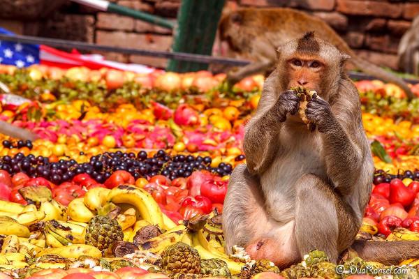 Monkey Banquet Festival, Lopburi
