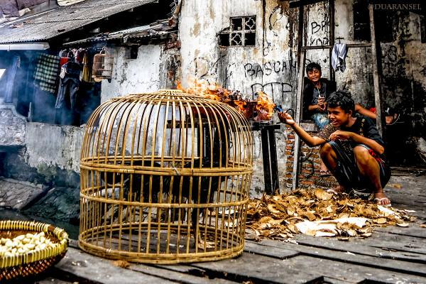 Menyiapkan batok kelapa untuk membakar ayam