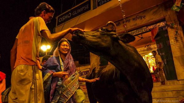 A holy cow named Gangga