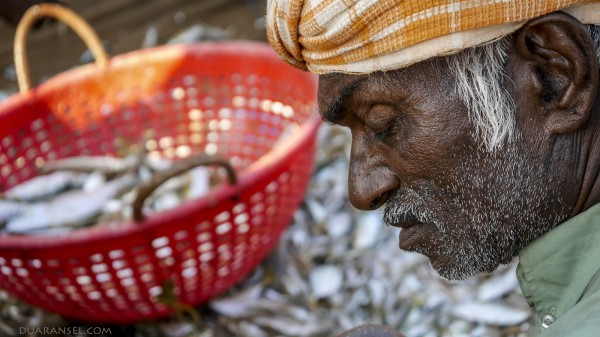 A fisherman sorting fish